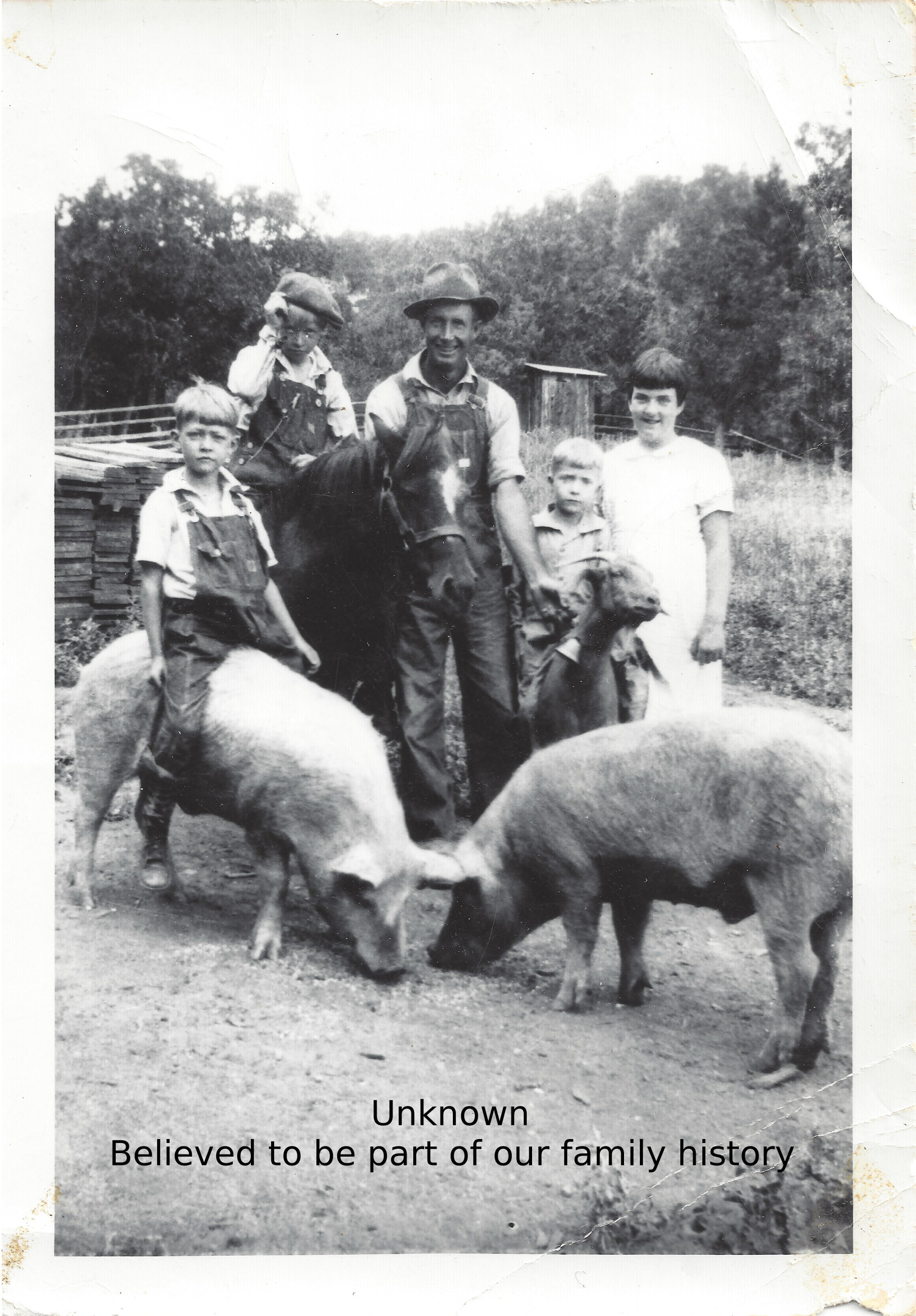Pigs and goat