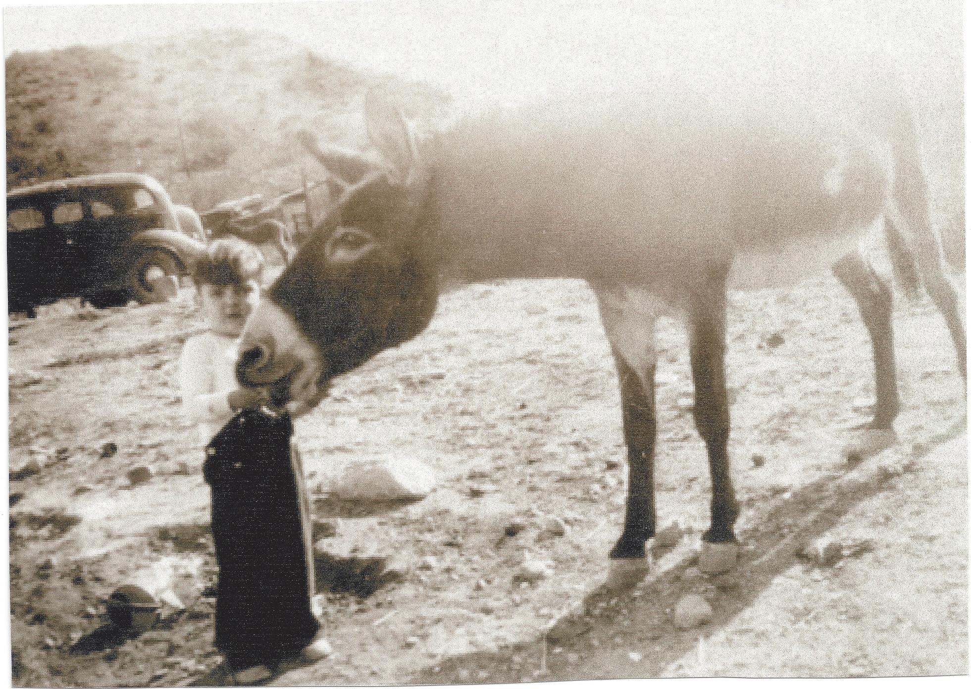 Skip WIlson with Donkey 2